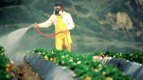 How Much Toxic Roundup Are You Eating? | Rodale's Organic Life