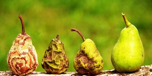 Four pears, from rotten to fresh