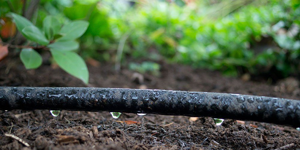 Why You Should Be Using Soaker Hoses in Your Garden