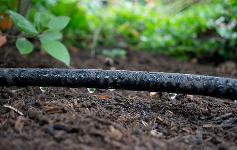 Drip Irrigation System In Your Garden