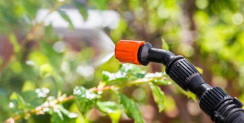 spray weeds with vinegar