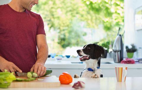 how to make healthy homemade dog food