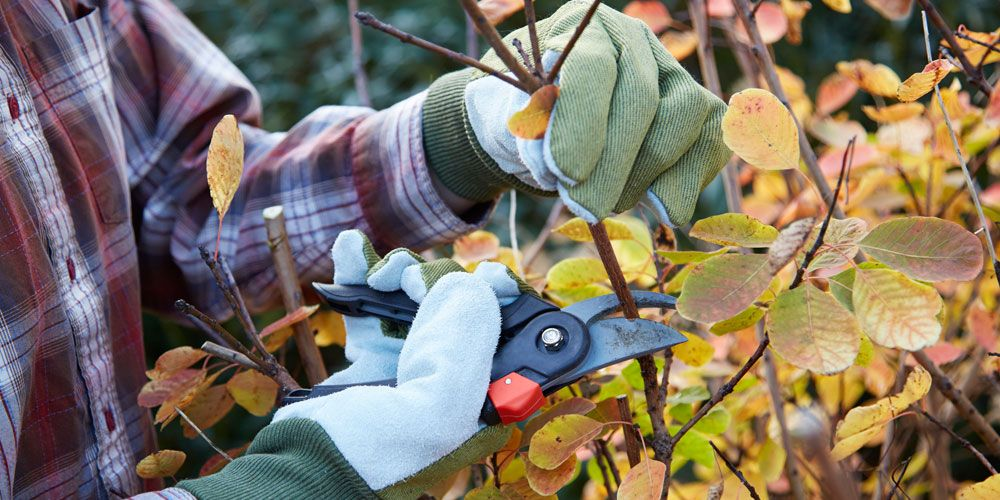 Stop Pruning Your Garden In The Fall When To Prune