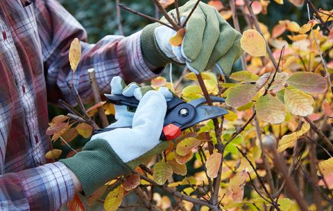 Image result for pruning trees and shrubs in fall