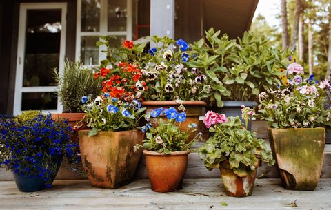 Potted Gardens Everything you need to know about container gardening rodales potted flowers workwithnaturefo