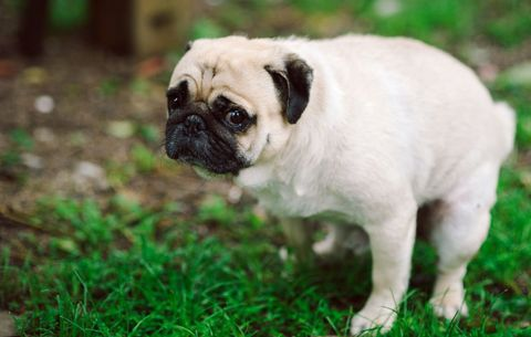 What Your Dog's Poop Can Tell You About Its Health - Healthy