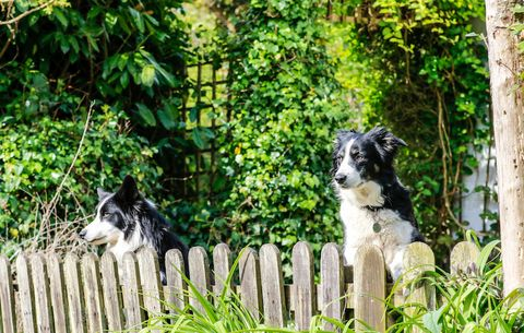 how to dog proof your backyard rodale s organic life