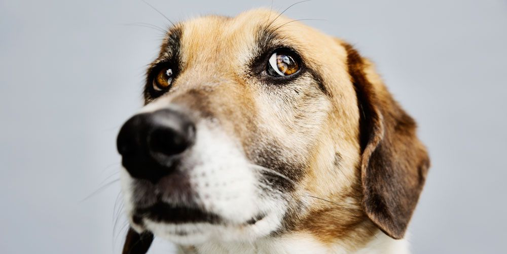 5 Ways To Ease Your Dog S Anxiety Signs Of Dog Anxiety