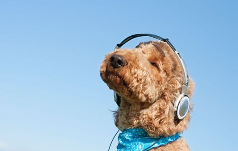 dog listening to music to ease anxiety