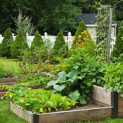 Why You Should Always Plant Flowers In Your Vegetable Patch