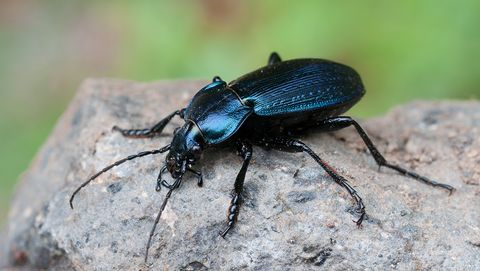 10 Beneficial Insects That Help Plants - Helpful Bugs That