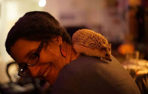 Why hedgehogs make excellent pets.