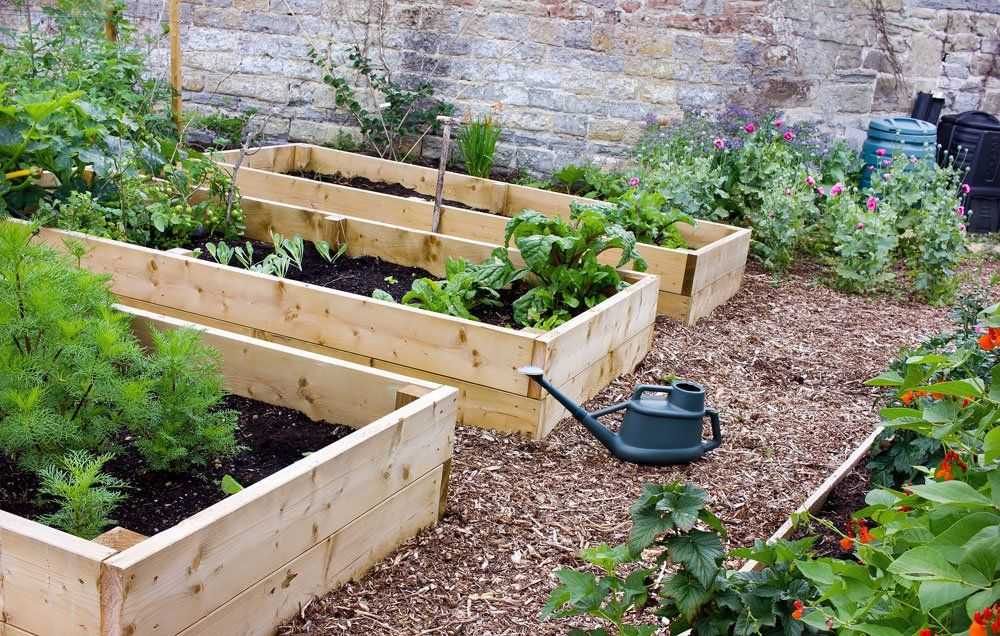 Plant In Raised Beds With Rich Soil. Raised Garden Beds
