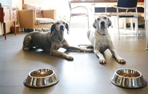4 Holistic Vets Reveal Exactly What They Feed Their Dogs