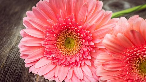 13 annual flowers you can easily grow from seeds rodales organic life daisy mightylinksfo