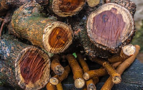 8 Kinds of Wood You Not to Burn - Bad Firewood You Should
