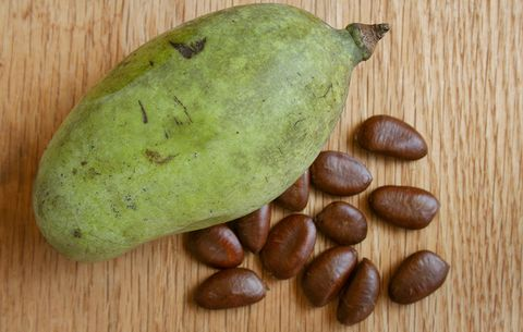 where to buy pawpaw