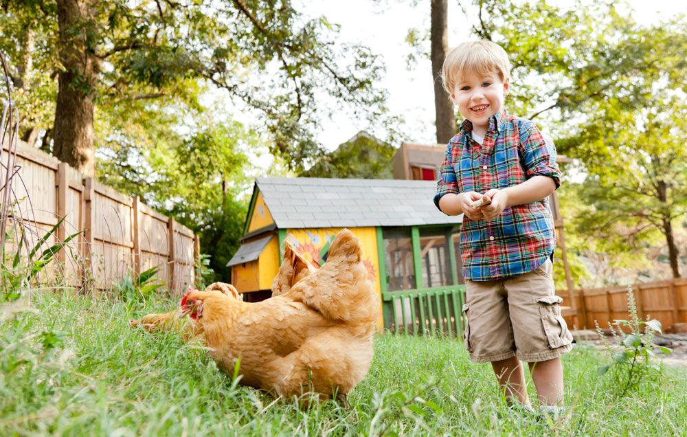 Everything You Need To Know About Raising Backyard Chickens | Rodaleu0027s  Organic Life