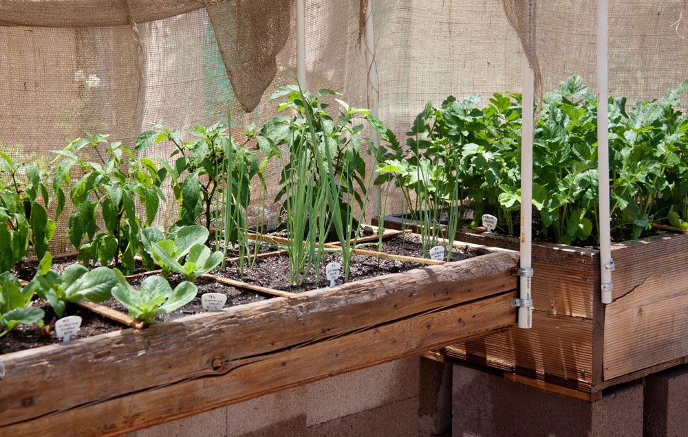The Pros And Cons Of Square Foot Gardening Rodales Organic Life