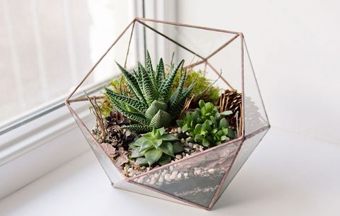 Succulents In Terrarium