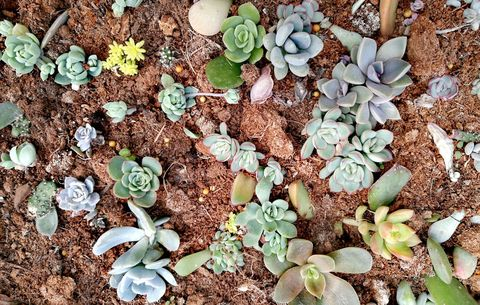 5 Mistakes You're Making With Your Succulents - Growing Succulents