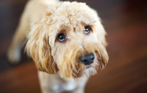 What To Do If Your Pet Ingests Something Toxic