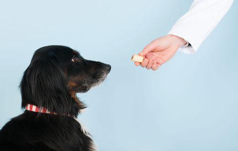 dog getting a treat