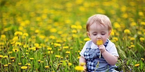 baby eating dandelions