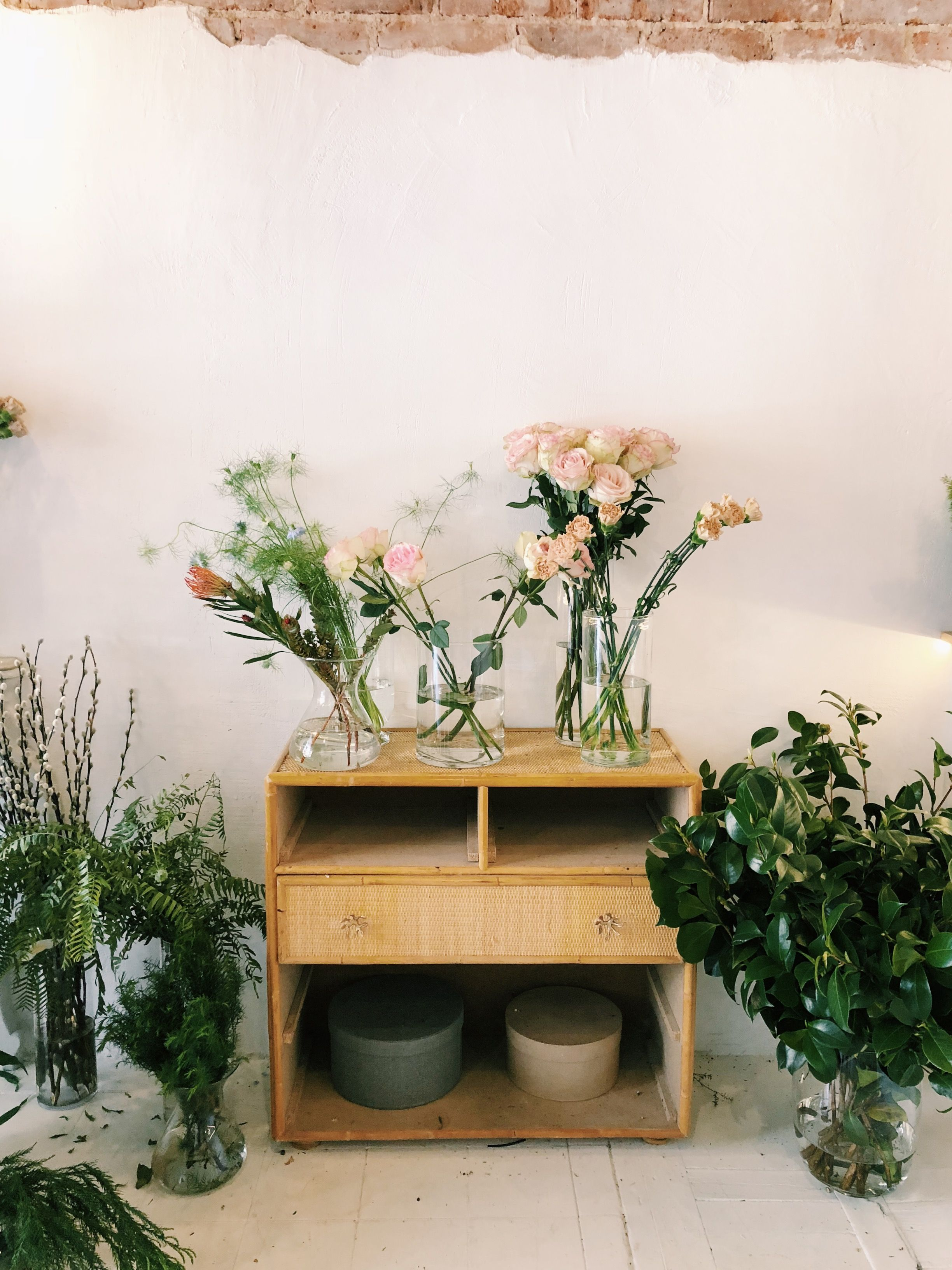 Las 10 Plantas De Interior Bonitas Baratas Y Duraderas Que - Plantas-bonitas-de-interior