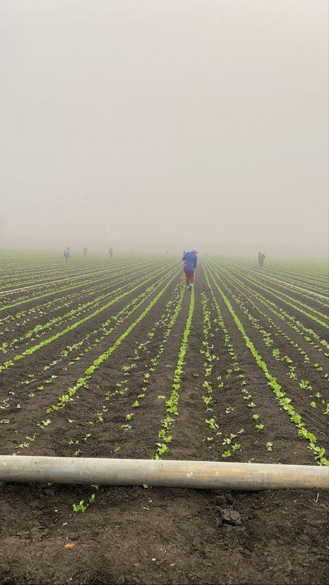 worker in a farm field
