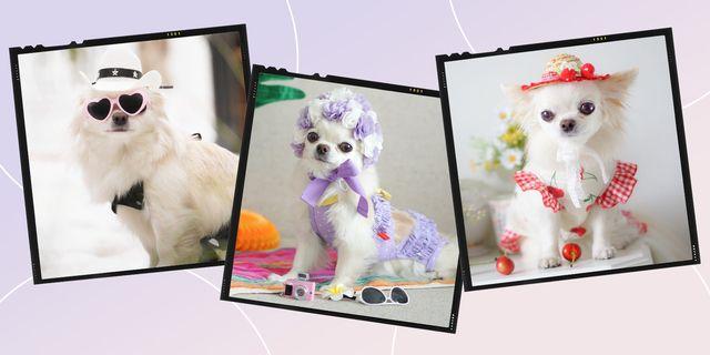 犬のファッション