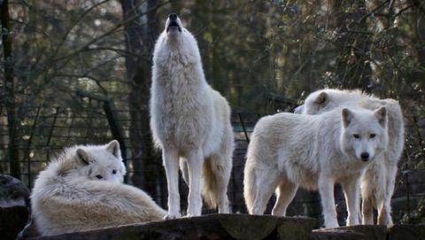 ontmoeting-wolf-overleven