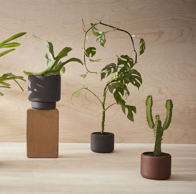 modern planters plant pots