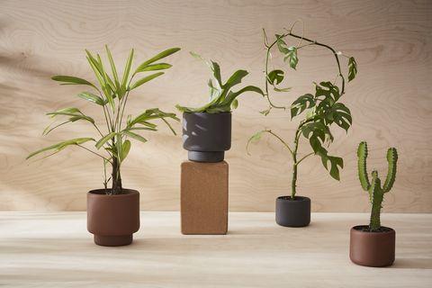 aaron probyn botany plant pots
