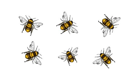 Ilustraciones de abejas