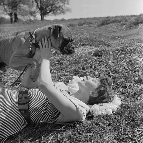 old hollywood stars before they were famous audrey hepburn and a dog