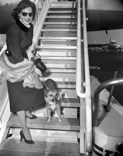 actress ava gardner and her dog, rags, leave international a