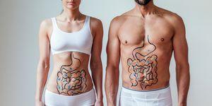 adelgazar, bacterias, tripa, bacterias intestinales