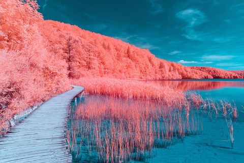 Adobe Stock for Pantone Colour of the Year 2019 - Living Coral