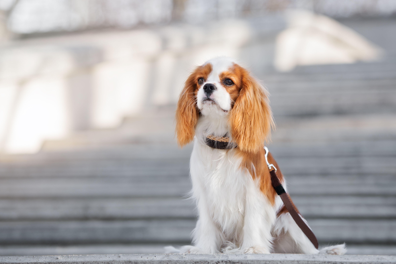 20 Best Dog Breeds for Kids - Good Family Dogs