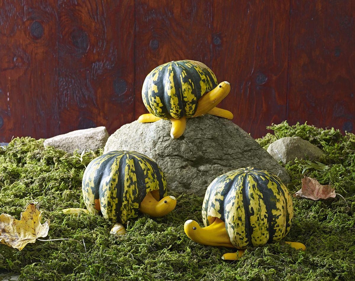 Adorable Turtles Pumpkins