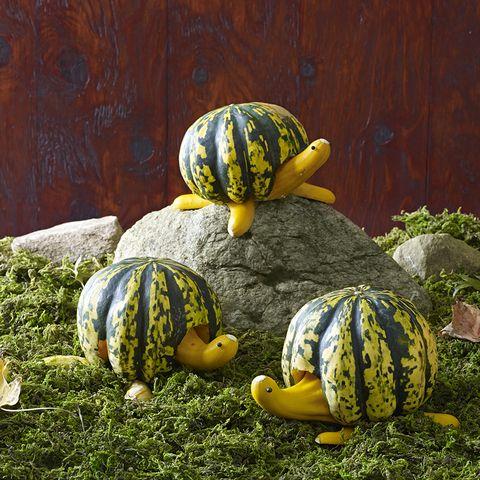 adorable turtle pumpkins