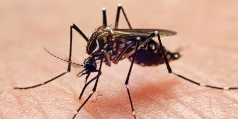 muggen verjagen was nog nooit zo makkelijk