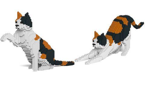 橘黑白色的貓在握手、伸懶腰