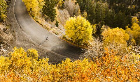 vista aérea, de, ciclista, en, camino rural
