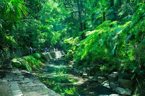 Vegetation, Nature, Natural landscape, Nature reserve, Green, Natural environment, Jungle, Forest, Tree, Old-growth forest,