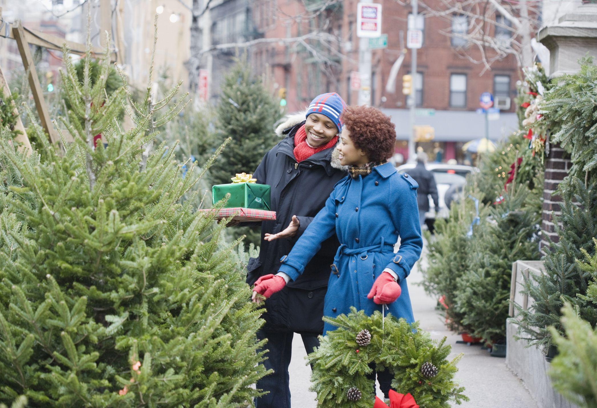 11 Best Types Of Christmas Trees Real Christmas Tree Varieties 2020