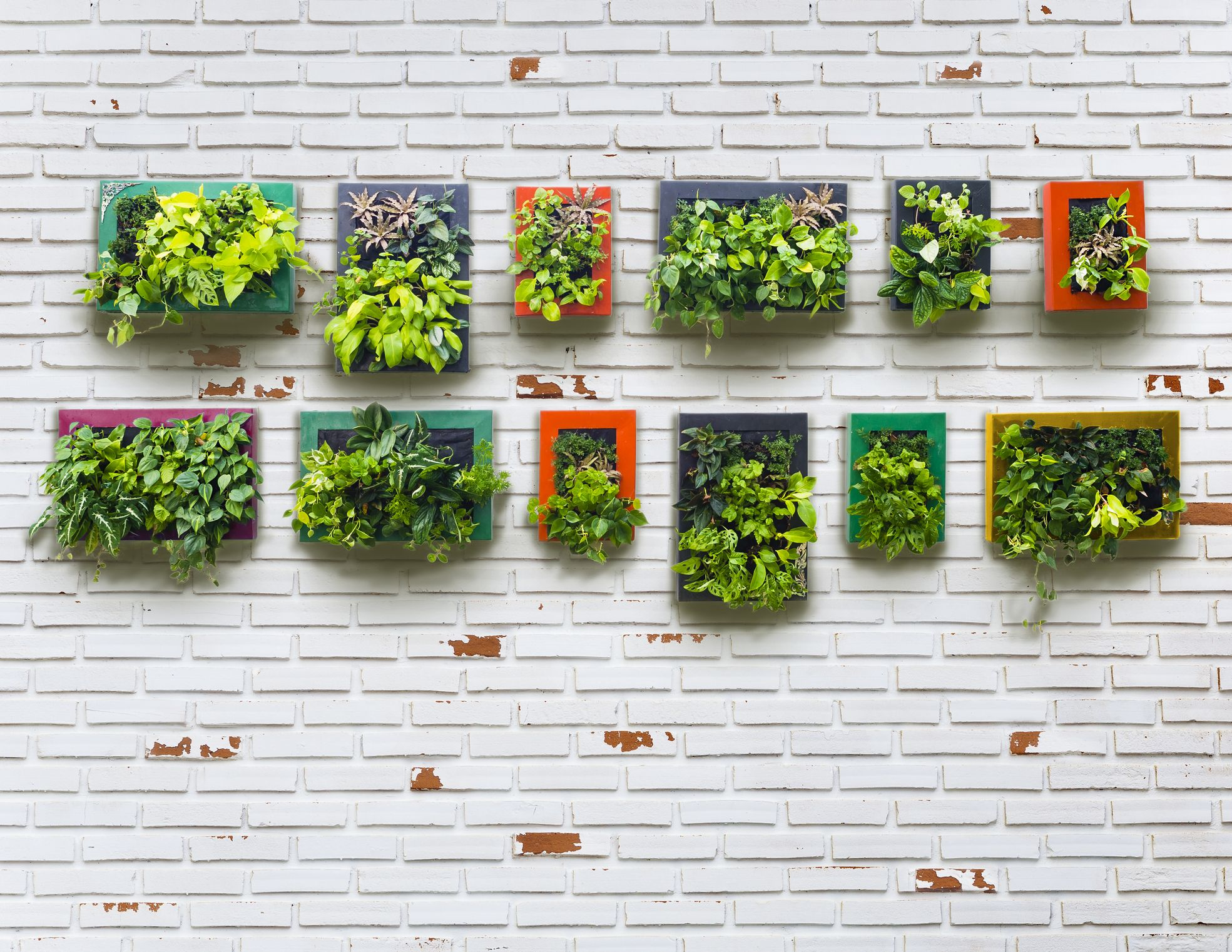 30+ creative ways to plant a vertical garden - how to make a