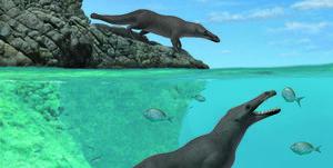 さらに水中では尻尾をビーバーのように使っていたそうです。