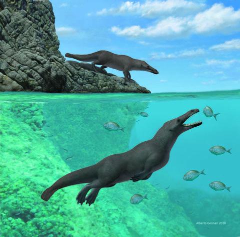 land whale pacific ocean